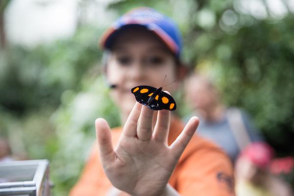 The Butterfly Garden of the Museum of Natural History